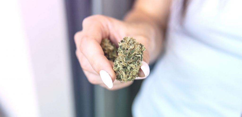 Big,Marijuana,Buds,In,Hands,Close-up.,Medical,Strains,Of,Cannabis