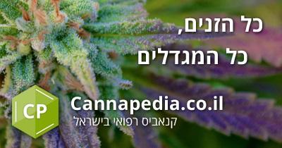 קנאפדיה