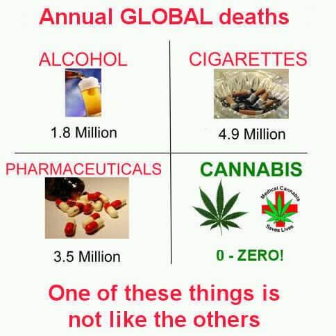 אלכוהול, סיגריות, תרופות או קנאביס... מה עדיף?