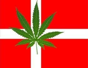 מריחואנה בדנמרק
