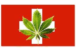 Photo of צרכני קנאביס בשווייץ יוכלו לגדל ארבעה שתילי מריחואנה בביתם