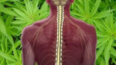 Photo of מחקר חדש: קנאביס עוזר לטיפול בפציעות בעמוד השדרה