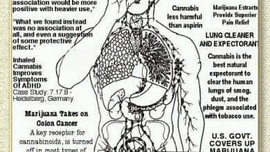 סגולותיו הרפואיות של הקנאביס