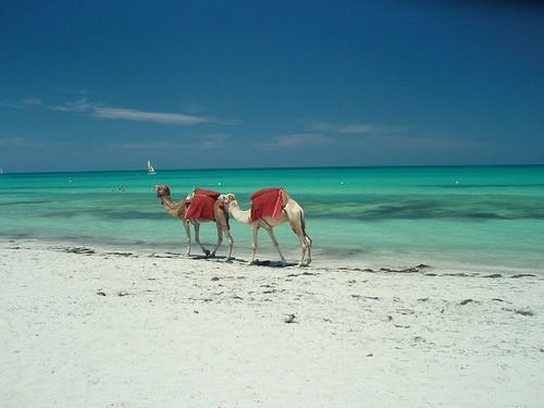 חופי תוניסיה
