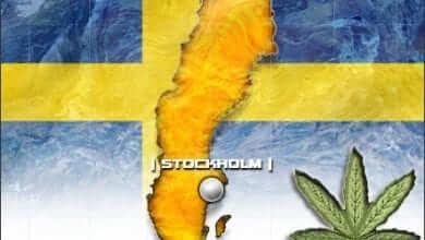 Photo of קנאביס רפואי לחולי טרשת נפוצה גם בשוודיה