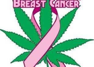 מריחואנה מרפאה סרטן