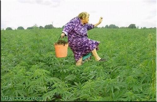 חשיש לקשיש ושאכטה לסבתא
