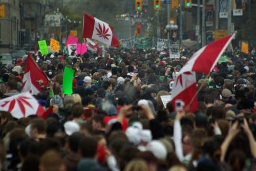 חגיגות מריחואנה - טורונטו קנדה