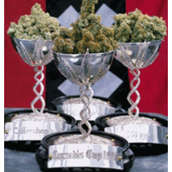 גביע הקנאביס - Cannabis Cup