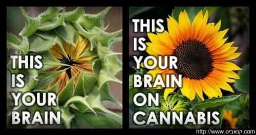 La marijuana apre la testa