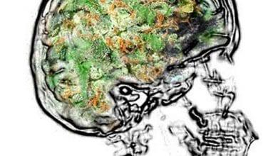 Photo of מוח מריחואנה – איך קנאביס מגביר את היווצרות התאים במוח