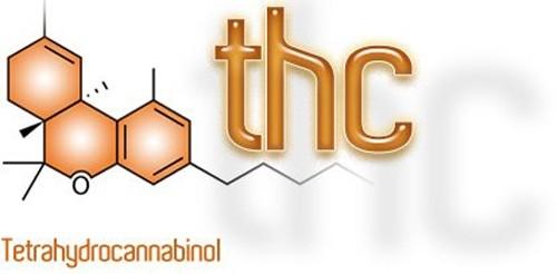 קנבינואיד THC