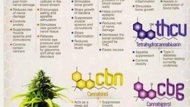 Photo of קנבינואידים בקנאביס – מה יש בתרופה שלכם?