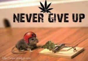 לעולם אל תוותר