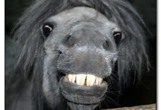 Photo of היי בנטורל: בעלי חיים שאוהבים להתמסטל