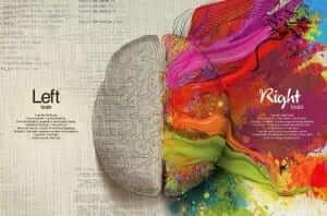 צד ימין וצד שמאל במוח