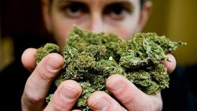 "Photo of דו""ח של האו""ם: מריחואנה – הסם הנפוץ ביותר בעולם"
