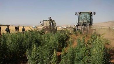 Photo of מלחמות מריחואנה בלבנון