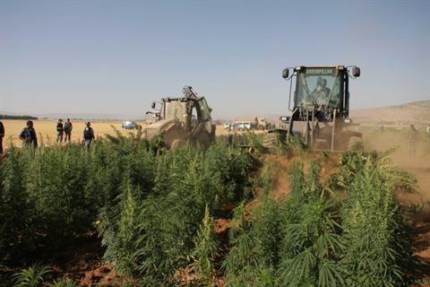 טרקטורים הורסים שדות מריחואנה בלבנון