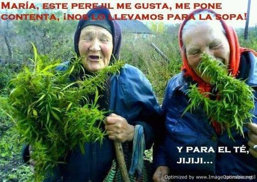סבתות מזרח-אירופאיות חוגגות בשדה מריחואנה