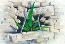 Je suis le cannabis