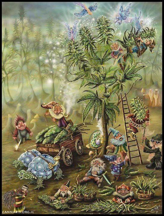 צמחי פלא