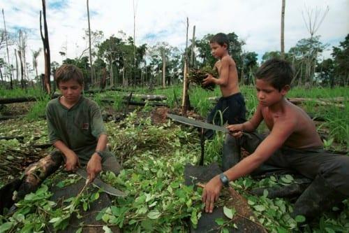 ילדים בשדות הקוקה בדרום אמריקה