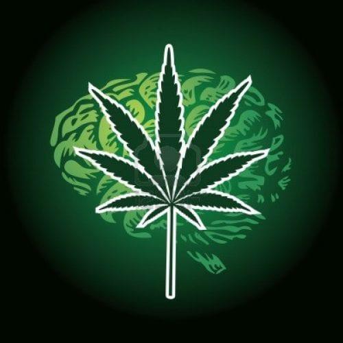 מוח מריחואנה