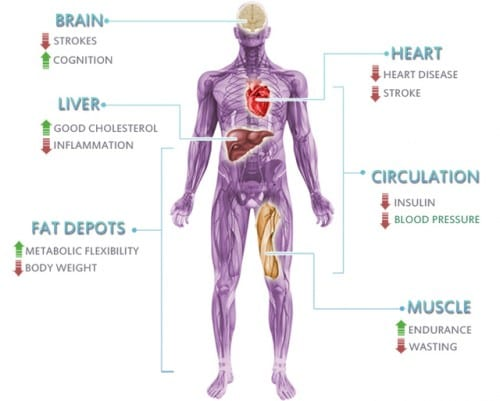 Effects of the endocannabinoid system