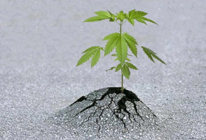 Пусть растение вырастет