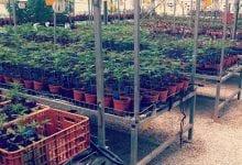 The legal cannabis market
