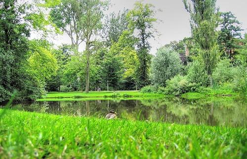 Очаровательный уголок в парке Вондель