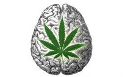 מוח קנאביס
