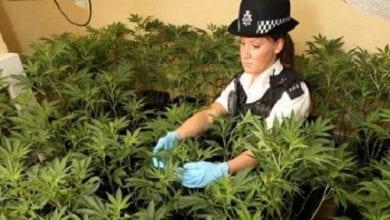 """Photo of """"המלחמה בסמים לא עובדת"""" – מאמינים יותר מ-75% מחברי הפרלמנט בבריטניה"""