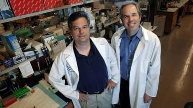 Photo of חוקרים מוכיחים שוב: קנאביס הורג סרטן