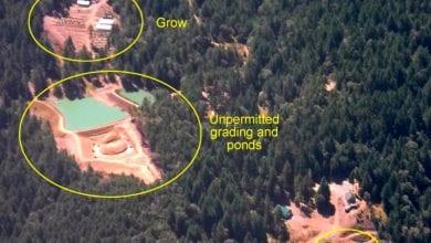 Photo of שדות מריחואנה נחשפים בעזרת לוויינים של גוגל