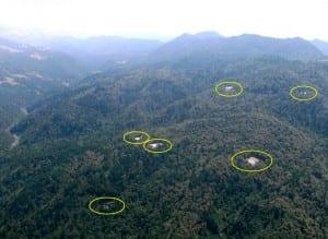 גידולי מריחואנה ביערות קליפורניה