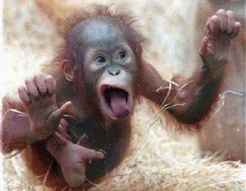 כולנו קופים