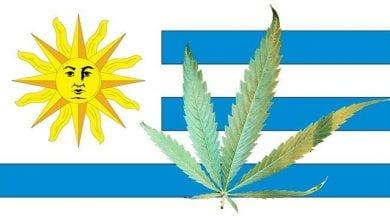 דגל אורוגוואי קנאביס לגליזציה