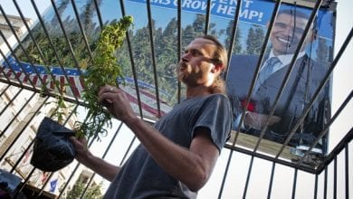 מתחיל לטפל בצמחים