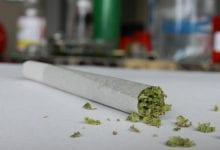 Marihuana medicinal conjunta