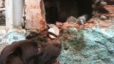 """Photo of """"המטרה: בראוני"""" – משפחת פשע פירסמה צו הריגה נגד כלב גישוש של המשטרה"""