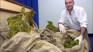 """Photo of אוסטרליה: קנאביס בשווי 19 מיליון דולר נתפס ע""""י משטרת ויקטוריה"""