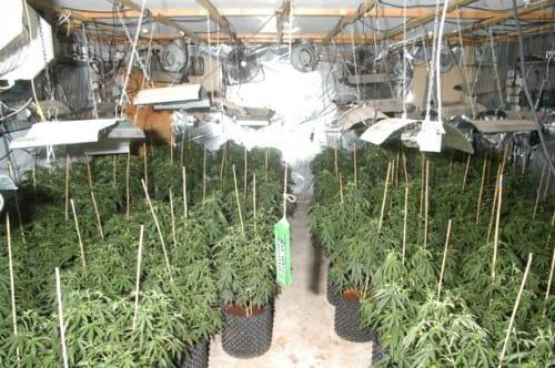 בית גידול מריחואנה