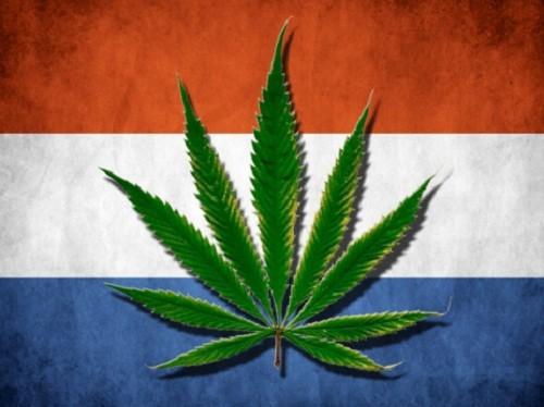 מריחואנה בהולנד