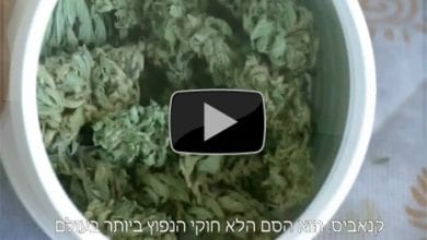 "Photo of ""עשב השדה"" – סרט דוקו-קנאביס ישראלי חדש"