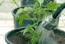 Промывка растительного субстрата