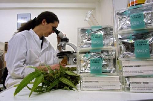 מעבדה לבחינת אחוזי קנבינואידים בקנאביס הרפואי