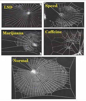 עכבישים על סמים