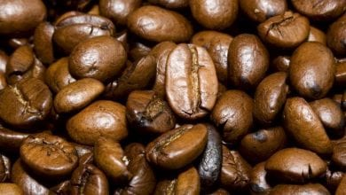 Photo of סוף עידן הקפה? חוקרים מעריכים שצמחי הקפה ייכחדו תוך 70 שנה